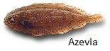 azevia
