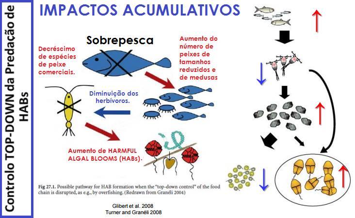 proliferacao_algas-1