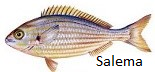 salema
