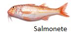 salmonete